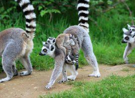 woburn safari park pr